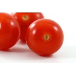 Tomate ronde 66  / 500 g